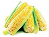 Полезные свойства кукурузы и противопоказания к употреблению