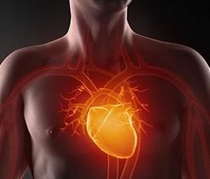 Здоровье сердца не связано с наличием «хорошего холестерина»