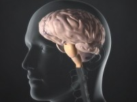 Рак мозга чаще возникает у людей с высшим образованием