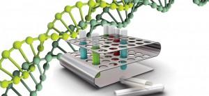 Схематическое изображение цепи ДНК кожных микозов