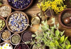 Травы для нормализации гормонального фона