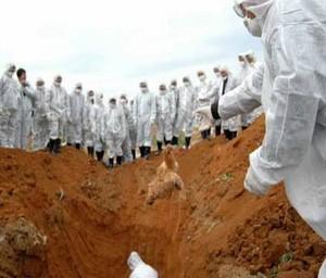 Эксперты: скоро человечество захлестнут глобальные эпидемиии